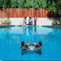 Hippopotamus (2 LP Ltd Pic. Disc)